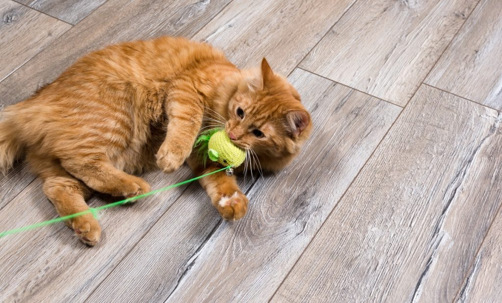 Cat playing with a yarn